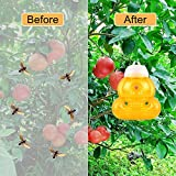 AWESMR 3 Pack Wasp Trap for Hornet Bees Yellow