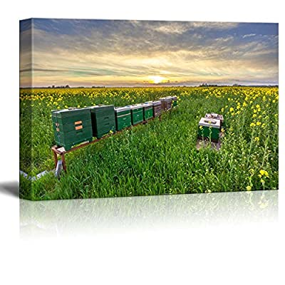Beautiful Scenery Landscape of Rows of Beehives in a Rapeseed Field at Sunset - Canvas Art Wall Art - 24
