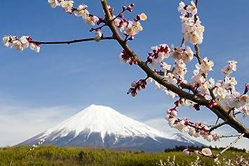 Japan Mount Fuji Cherry Blossom Wallpaper Mural By