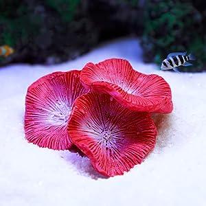 "Danmu 1Pc of Polyresin Coral Ornaments, Aquarium Coral Decor for Fish Tank Aquarium Decoration Mini Size 2 1/3"" x 1 1/2"" x 7/10"""
