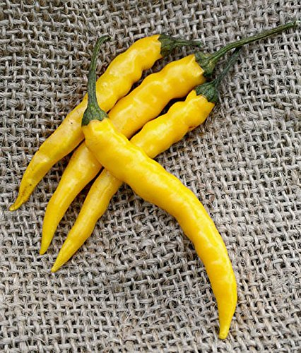 Yellow Bedder Macedonian Heirloom Pepper Premium Seed Packet + More