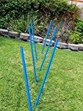 Triple A Dogs Dog Agility Training Weave Poles