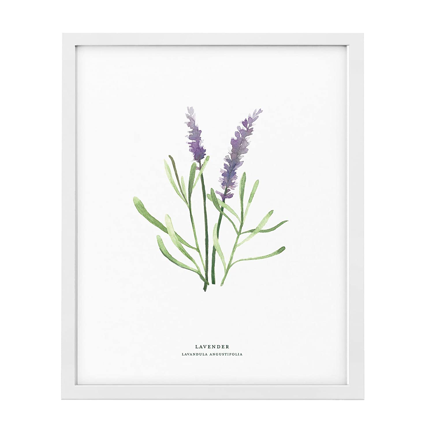 Lavender Plant Garden Decor - 8x10 or 11x14