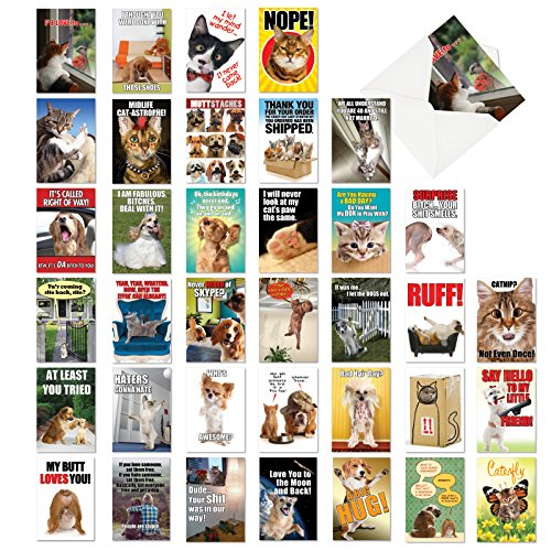 - Best Pets Collection - 36 Funny Assorted Blank Note Cards with Envelopes (4.63 x 6.75 Inch) - Dog, Cat, Animal Lovers, All Occasion Greeting Card Set - Boxed Stationery Notecards AC6654OCB-B1x36