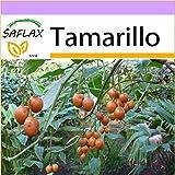 SAFLAX - Tamarillo - 50 seeds - Cyphomandra betacea