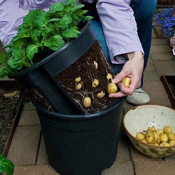 Plástico Siembra Macetas con Drenaje Vivero Tomates en Maceta, Patatas Plántulas Envase Semilla Macetas de Inicio Interior Exterior (Negro): Amazon.es: ...