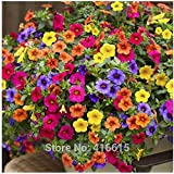 200 Seeds Heirloom Hanging Petunia Mixed Seeds Color Waves Hanging Basket Petunia Beautiful Flowers Light Up Your Garden
