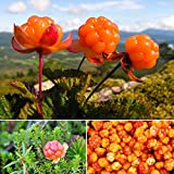 Cloudberry Seeds Rubus Chamaemorus Edible Arctic Berry Fruit Seeds 10PCS/Bag