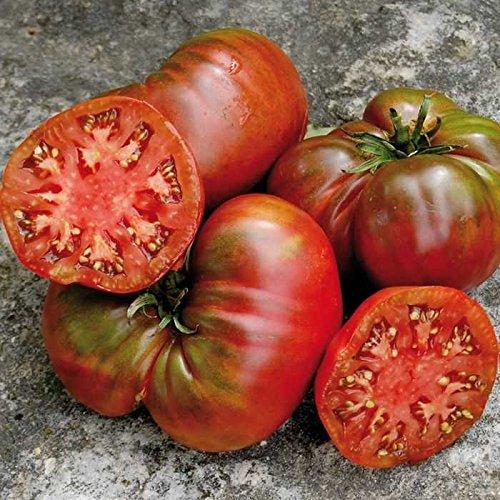 David's Garden Seeds Tomato Slicing Black Sea Man (Red) 25 Heirloom Seeds (Gravy Heirloom)