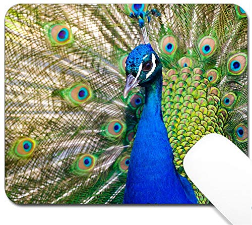 MSD Mouse Pad with Design - Non-Slip Gaming Mouse Pad - Image 22635999 Colorful Blue Ribbon Peacock in Full Feather Color Saturated]()