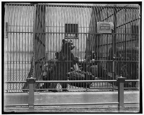 Photo: Russian bears,Highland Park Zoo,Pittsburgh,PA,Detroit Publishing - Shopping Pa In Pittsburgh