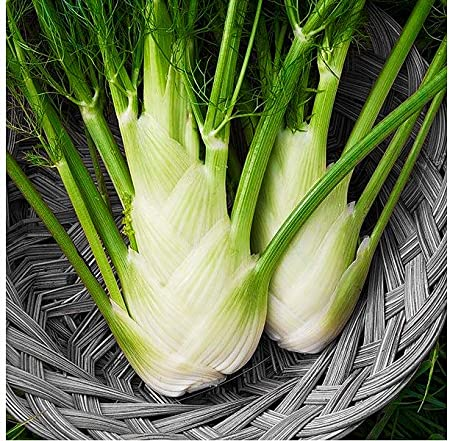 100 ORGANICALLY GROWN Fennel Florence Seeds Heirloom NON-GMO Fragrant From USA
