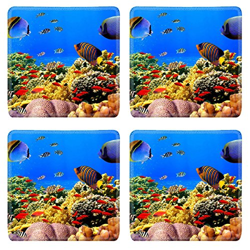 Liili Square Coasters Non-Slip Natural Rubber Desk Pads Photo of a coral colony on a reef Egypt IMAGE ID 9488771 -