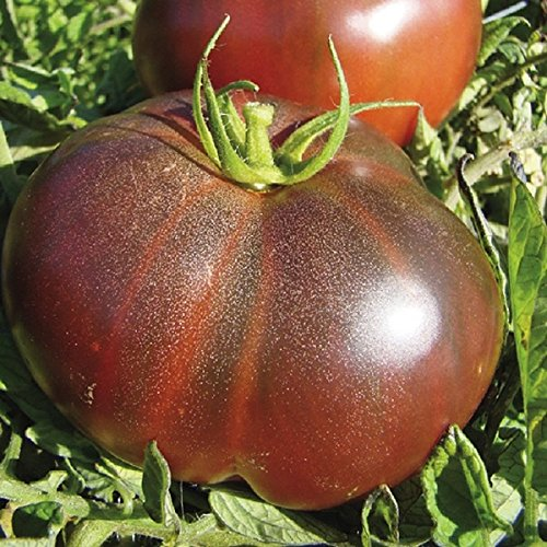Black Krim Tomato Seeds - Organic Heirloom Large Tomato - One of the Most Delicious Tomatoes for Home Growing, Non GMO - Neonicotinoid-Free. (Krim Tomato Black)