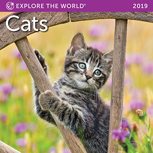 "Cats Mini Wall Calendar 2019 Monthly January-December 7"" x 7"""