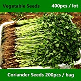 Shopmeeko ^^Annual Coriander ^^^^ for Planting 400pcs, Concentrated Flavor Cilantro Vegetable ^^^^, Fast-Growing Coriandrum Sativum ^^^^