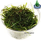 Our Recommended Java Moss from GreenPro