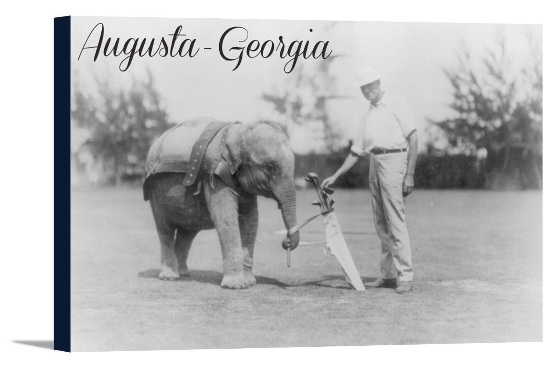 Augusta , Georgia – Elephant Caddie 36 x 24 Gallery Canvas LANT-3P-SC-53308-24x36 B0184AZAWK  36 x 24 Gallery Canvas