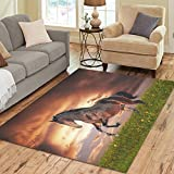 Cheap InterestPrint Home Decoration Horse Running On Freedom Area Rug 7′ x 5′ Cover Feet, Beautiful Running Horse Cloud Carpet Rugs Cover for Home Living Dining Room