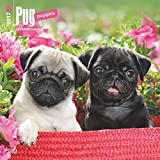 Pug Puppies Wall Calendar Dogs 2018 {jg} Best Holiday Gift Ideas - Great for mom, dad, sister, brother, grandparents, , grandchildren, grandma, gay, lgbtq.
