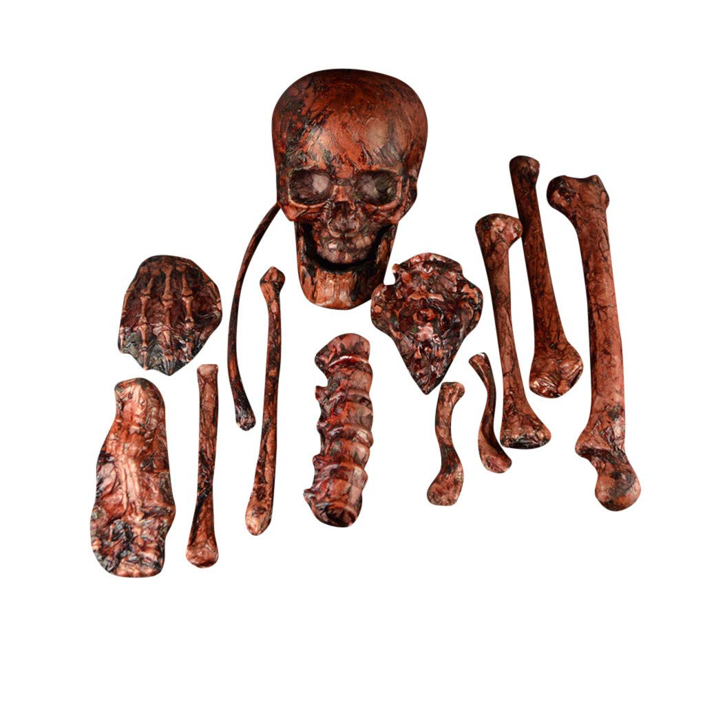 Meetsunshine Halloween Halloween Skeleton, Skeleton Set Horror Props Party Decoration Human Skull Skeleton Anatomical Decoration (C) by Meetsunshine Halloween