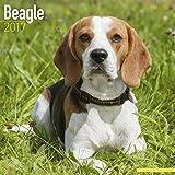 Beagle Calendar 2017 - Dog Breed Calendars - 2016 - 2017 wall calendars - 16 Month by Avonside