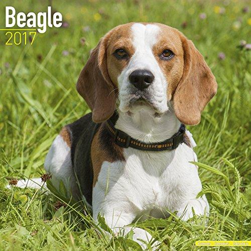 Beagle Calendar 2017 - Dog Breed Calendar - Wall Calendar 2016-2017