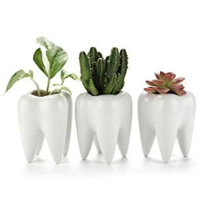 T4U White Ceramic Tooth Shaped Succulent Planter Pots Set of 3, Cute Cactus Plant Pot Creative Pen Pencil Holder for Home Office Desk Decoration Birthday Wedding Christmas Gift