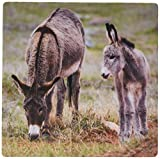 3dRose LLC 8 x 8 x 0.25 Inches Mouse Pad, South Dakota Custer Wild Burros, Jamie and Judy Wild (mp_92835_1)