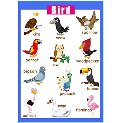 Educational posters   Laminated charts for preschool classroom decorations    Kindergarten posters for classroom toddler wall decor-17x24 in – Bird