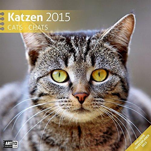 Katzen 30 x 30 cm 2015
