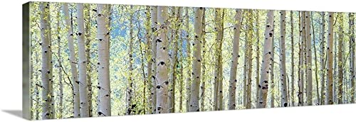 Aspen Canvas Wall Art Print