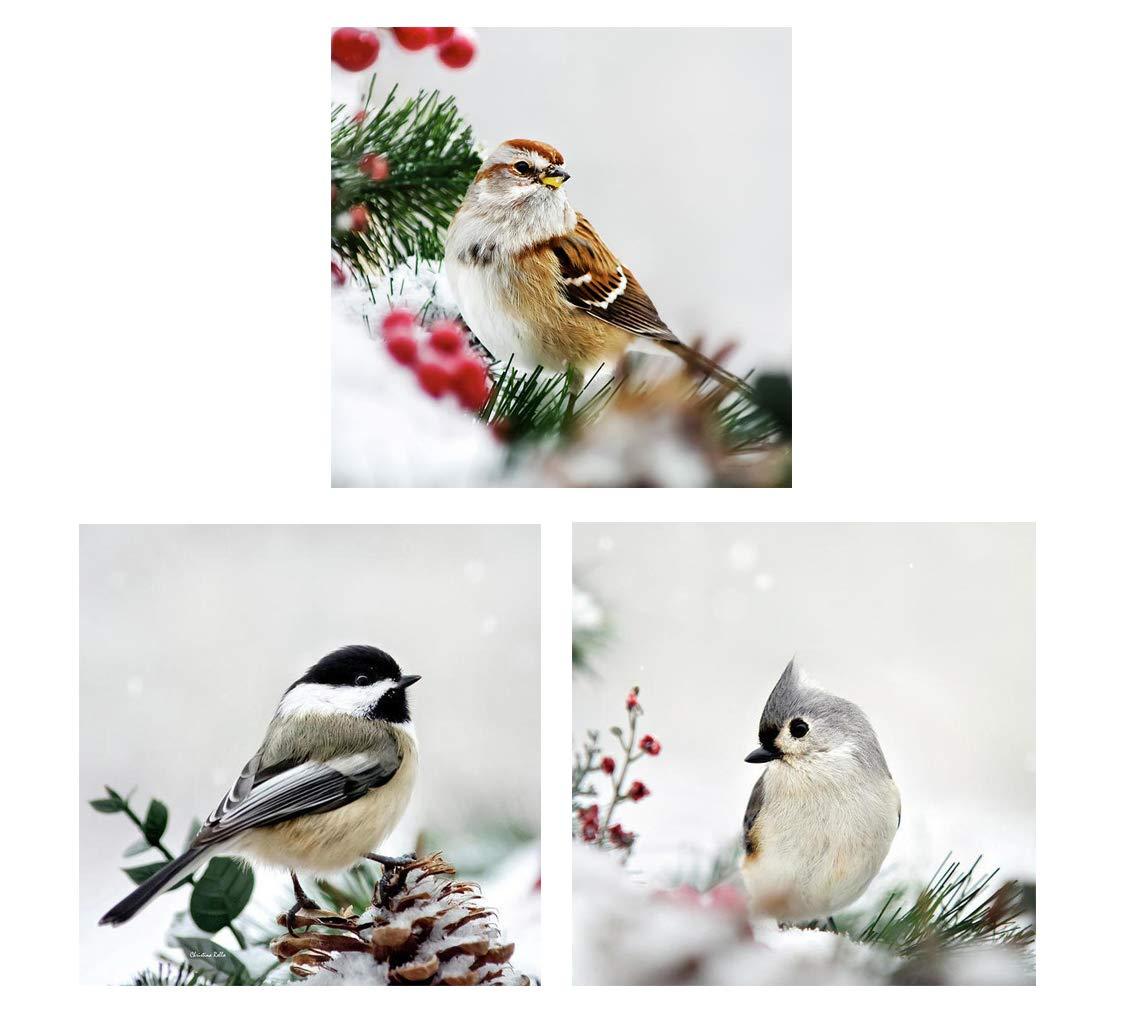 Winter Bird Wall Art Set of 3 Songbird Animal Prints Snowy Wildlife Decor Fine Art Photography Nature Pictures