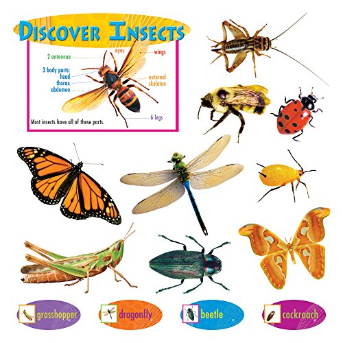Discover Insects Mini Bulletin Board Set ()