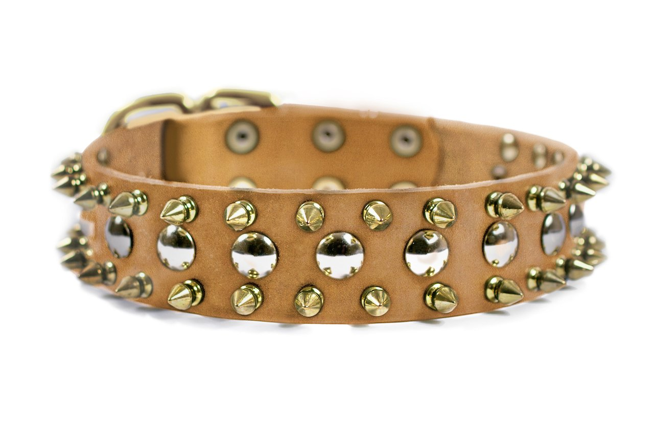 Dean and Tyler  THE goldEN SPIKE , Dog Collar with Solid Brass Buckle Tan Size 51cm by 4cm Fits Neck Size 46cmes to 56cmes.