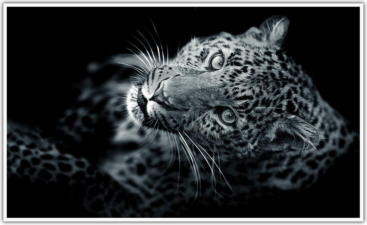 Bildheizung in HD Qualit/ät mit T/ÜV//GS Black Edition 200+ Bilder -1000Watt Patentiert -Wei/ßer/_Rahmen 015. Wasserfall K/önighaus Fern Infrarotheizung