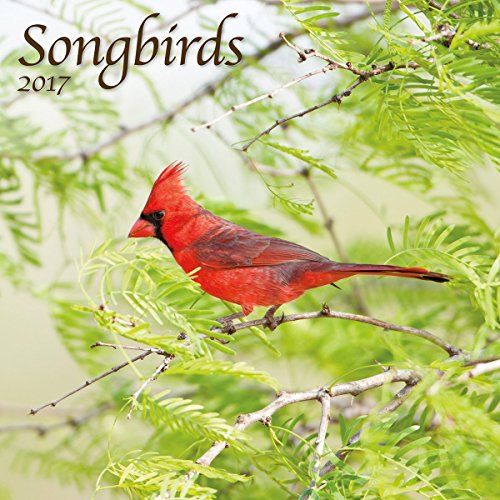 Turner Photo 2017 Songbirds Photo Wall Calendar, 12 x 24 inches opened (17998940052)