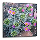3dRose Danita Delimont - Cactus - USA, Utah, Arches NP. Whipples Fishhook Cactus blooming and with buds - 10x10 Wall Clock (dpp_260326_1)