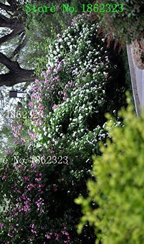 Caliente! 100pcs semillas de flor china Semillas color anaranjado Rose del arco iris con Encanto plantas bonsai para Jardín Precio al por mayor libre de la nave: Amazon.es: Jardín