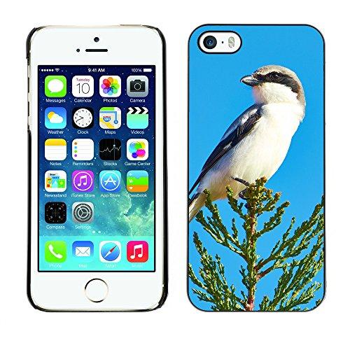Premio Sottile Slim Cassa Custodia Case Cover Shell // F00009188 insecte // Apple iPhone 5 5S 5G