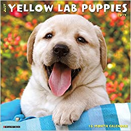 Just Yellow Lab Puppies 2017 Wall Calendar Dog Breed Calendars