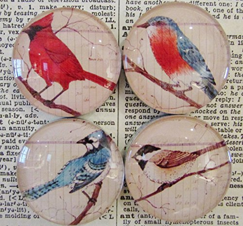 Bird Magnets, Decorative Magnets, Art Magnets, Set of Four, Cardinal, Blue Bird, Blue Jay, (Bird Magnet Set)
