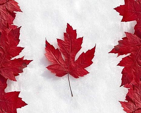 Pintando Adultos Por Numero Bandera De Canadá Con Hoja De