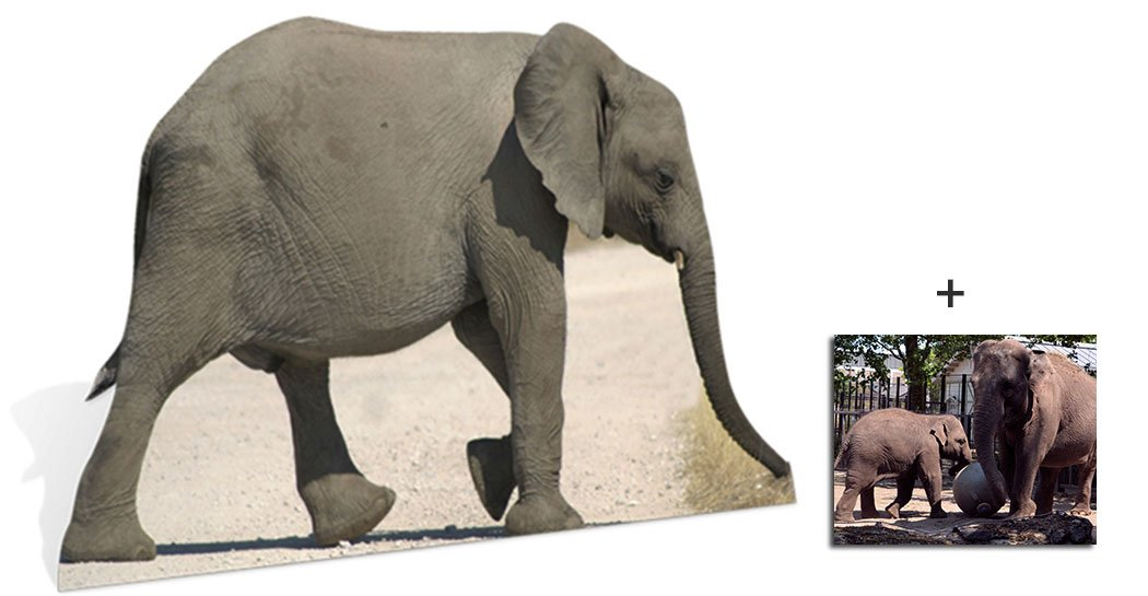 Baby Elephant - Wildlife/Animal Lifesize Cardboard Cutout / Standee / Standup - Includes 8x10 (20x25cm) Star Photo