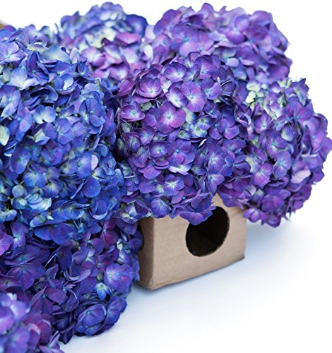 Farm2Door Fresh Hydrangeas: 12 Purple Hydrangeas - Farm Direct Wholesale Fresh Flowers by Farm2Door