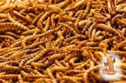 Chubby Mealworms High Quality Bulk Dried Mealworms for Wild Birds, Chickens etc. (2Lbs)