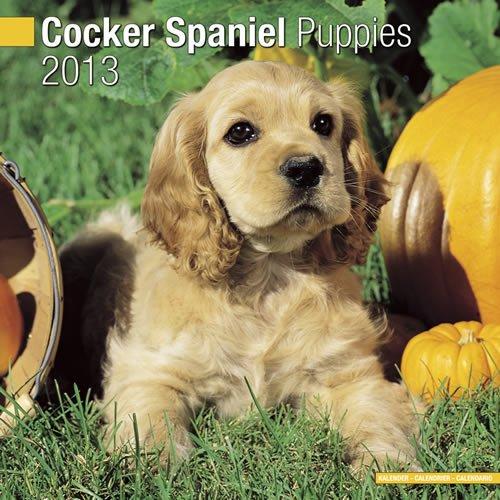 Spaniel 2013 Calendar - Cocker Spaniel Puppies 2013 Wall Calendar #10203-13