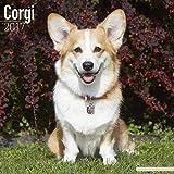 Corgi Calendar 2017 - Pembrook Welsh Corgi Calendar - Corgi Dog - Pembrook Corgi - Dog Breed Calendars - 2016 - 2017 wall calendars - Calendar by Avonside