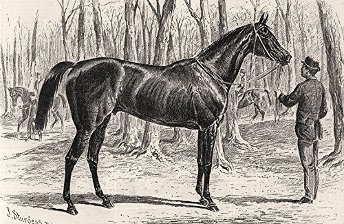 New Holland, winner of the Goodwood Cup. Sussex - 1876 - old print - antique print - vintage print - printed prints of Sussex