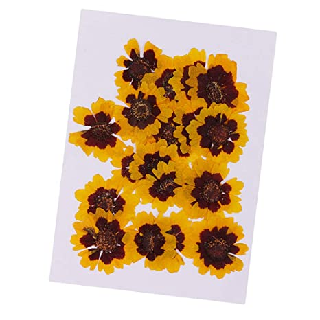 Art Crafts Epoxy Resin Jewelry Craft JETEHO 24 Pieces Real Forget Me Not Pressed Leaves Natural Dried Flowers for Scrapbooking Card